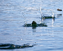 A social media post is like a stone skipping across a pond. Each comment or retweet makes new ripples.